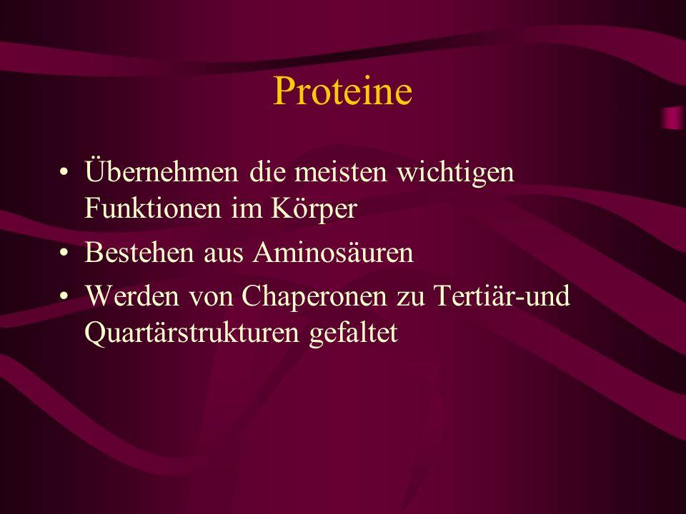 Proteine Übernehmen die meisten wichtigen Funktionen im Körper Bestehen aus Aminosäuren Werden von Chaperonen zu Tertiär-und Quartärstrukturen gefalte