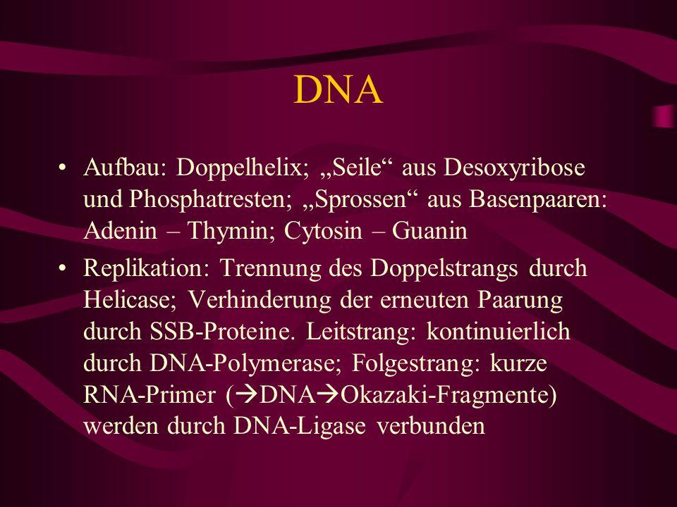 DNA Aufbau: Doppelhelix; Seile aus Desoxyribose und Phosphatresten; Sprossen aus Basenpaaren: Adenin – Thymin; Cytosin – Guanin Replikation: Trennung