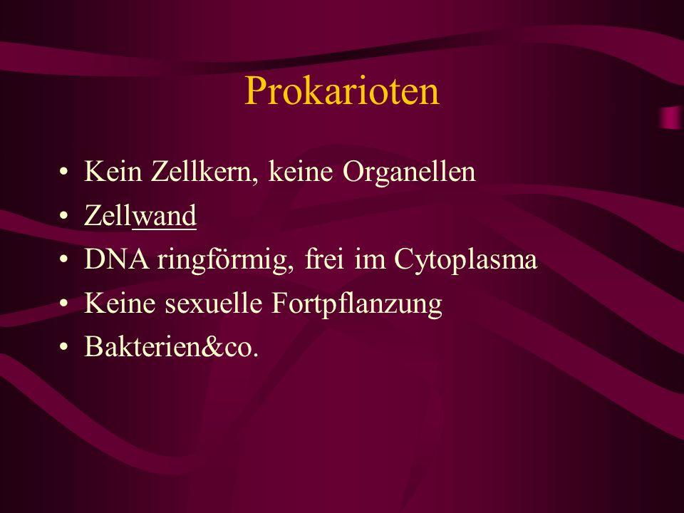 Prokarioten Kein Zellkern, keine Organellen Zellwand DNA ringförmig, frei im Cytoplasma Keine sexuelle Fortpflanzung Bakterien&co.