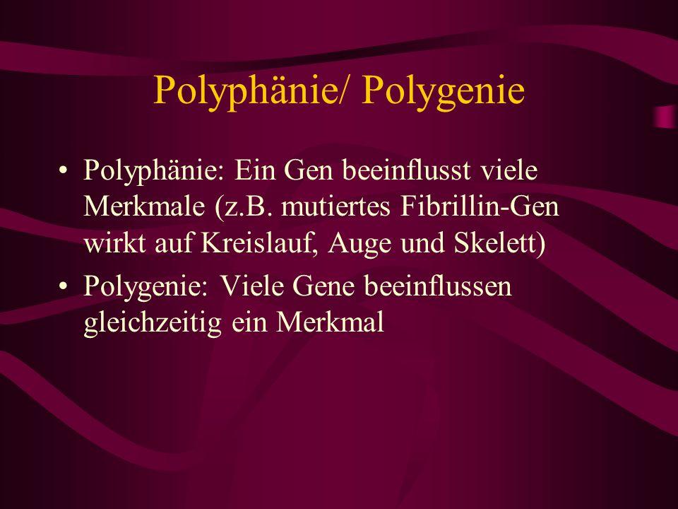 Polyphänie/ Polygenie Polyphänie: Ein Gen beeinflusst viele Merkmale (z.B. mutiertes Fibrillin-Gen wirkt auf Kreislauf, Auge und Skelett) Polygenie: V
