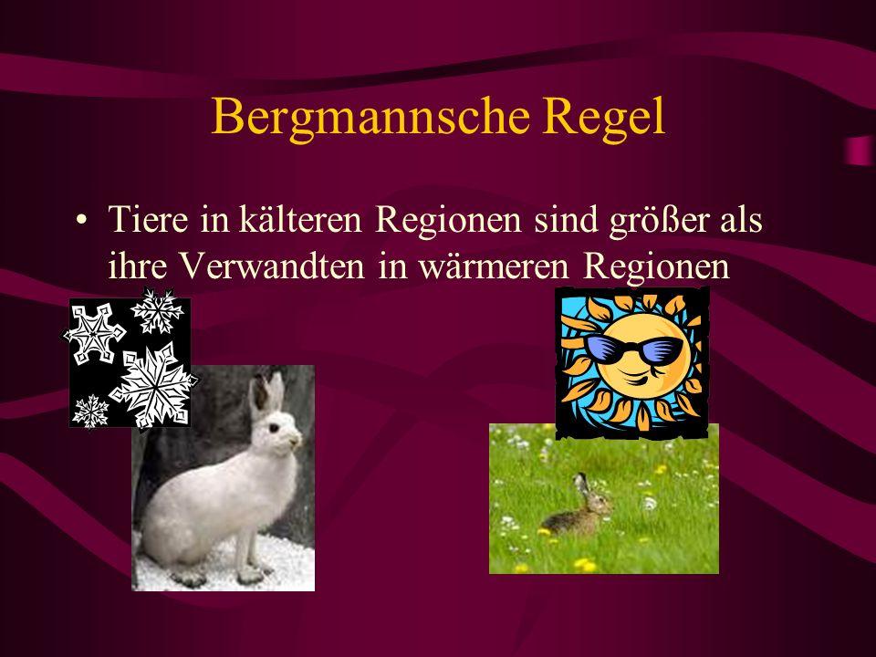 Bergmannsche Regel Tiere in kälteren Regionen sind größer als ihre Verwandten in wärmeren Regionen