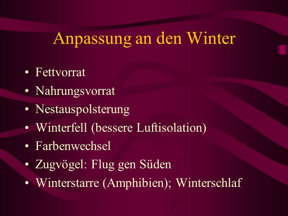 Anpassung an den Winter Fettvorrat Nahrungsvorrat Nestauspolsterung Winterfell (bessere Luftisolation) Farbenwechsel Zugvögel: Flug gen Süden Winterst