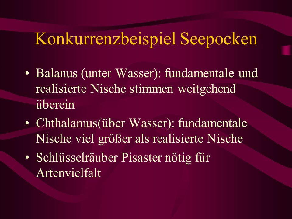 Konkurrenzbeispiel Seepocken Balanus (unter Wasser): fundamentale und realisierte Nische stimmen weitgehend überein Chthalamus(über Wasser): fundament