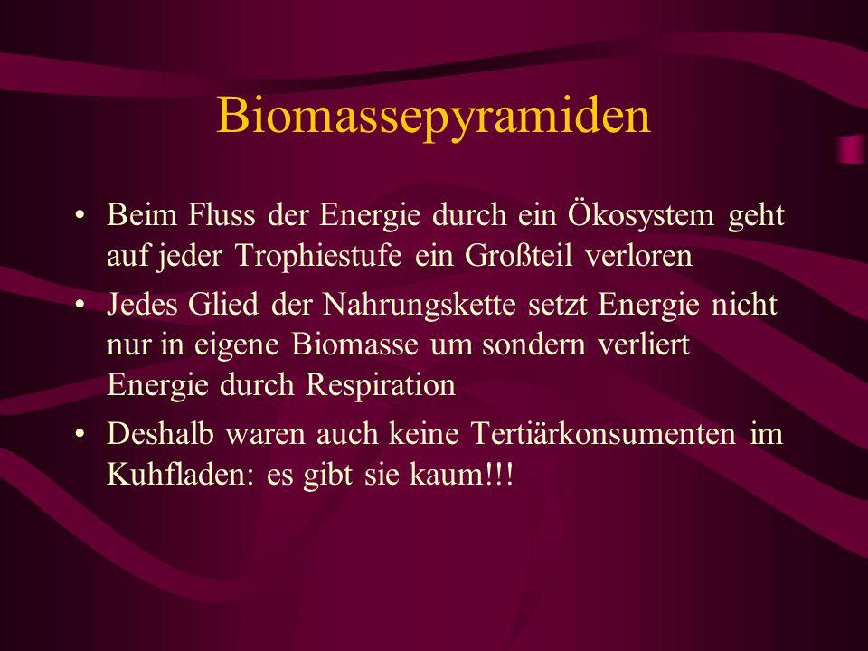 Biomassepyramiden Beim Fluss der Energie durch ein Ökosystem geht auf jeder Trophiestufe ein Großteil verloren Jedes Glied der Nahrungskette setzt Ene