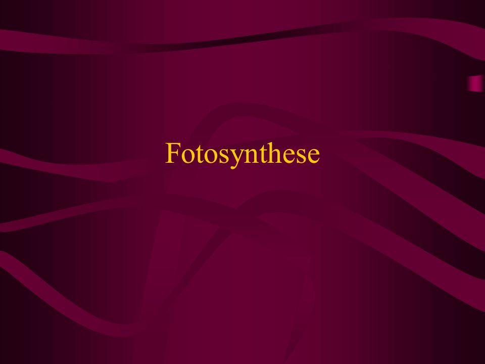 Stickstoffkreislauf Für Pflanzen verwertbar: NH4+ (Ammonium), NO³- (Nitrat) N² in der Atmosphäre (80%); nicht für Pflanzen verfügbar Atmosphärische Deposition (5-10%): Ammonium und Nitrat gelangen im Regen gelöst oder mittels Feinstaub in den Boden Stickstoff-Fixierung durch Prokaryoten Zunächst Wandlung in Ammoniak NH³/pH-Wert abhängig