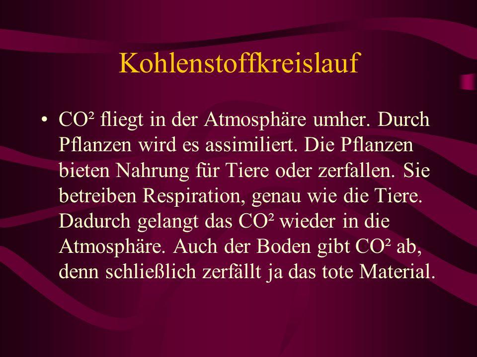 Kohlenstoffkreislauf CO² fliegt in der Atmosphäre umher. Durch Pflanzen wird es assimiliert. Die Pflanzen bieten Nahrung für Tiere oder zerfallen. Sie