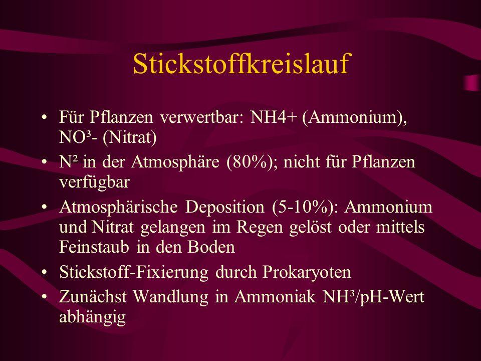 Stickstoffkreislauf Für Pflanzen verwertbar: NH4+ (Ammonium), NO³- (Nitrat) N² in der Atmosphäre (80%); nicht für Pflanzen verfügbar Atmosphärische De
