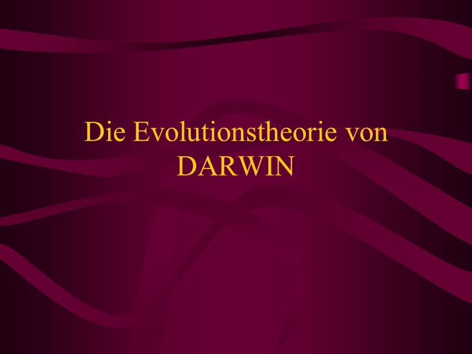Die Evolutionstheorie von DARWIN