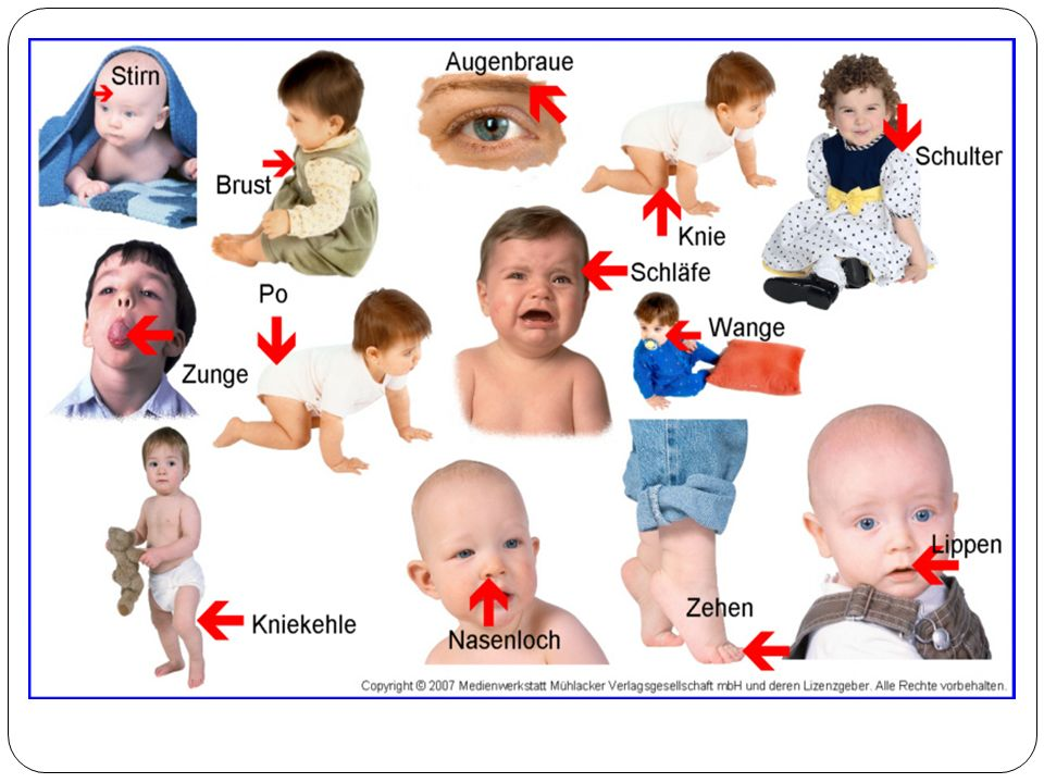 -r Oberkörper -r Unterkörper -e Gliedmaße (-n) -r Organ (-e) / innere Organe -r Knochen (-) -r Muskel (-n) -e Ader (-n); -s Blut -r Nerv (-en) -e Haut