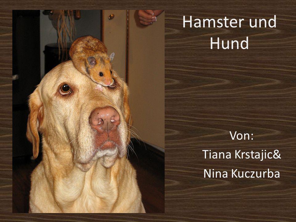 Hamster und Hund Von: Tiana Krstajic& Nina Kuczurba