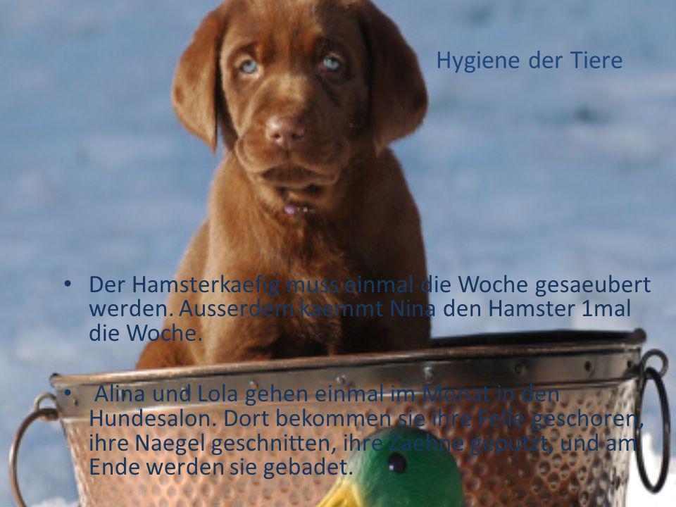 Hygiene der Tiere Der Hamsterkaefig muss einmal die Woche gesaeubert werden. Ausserdem kaemmt Nina den Hamster 1mal die Woche. Alina und Lola gehen ei