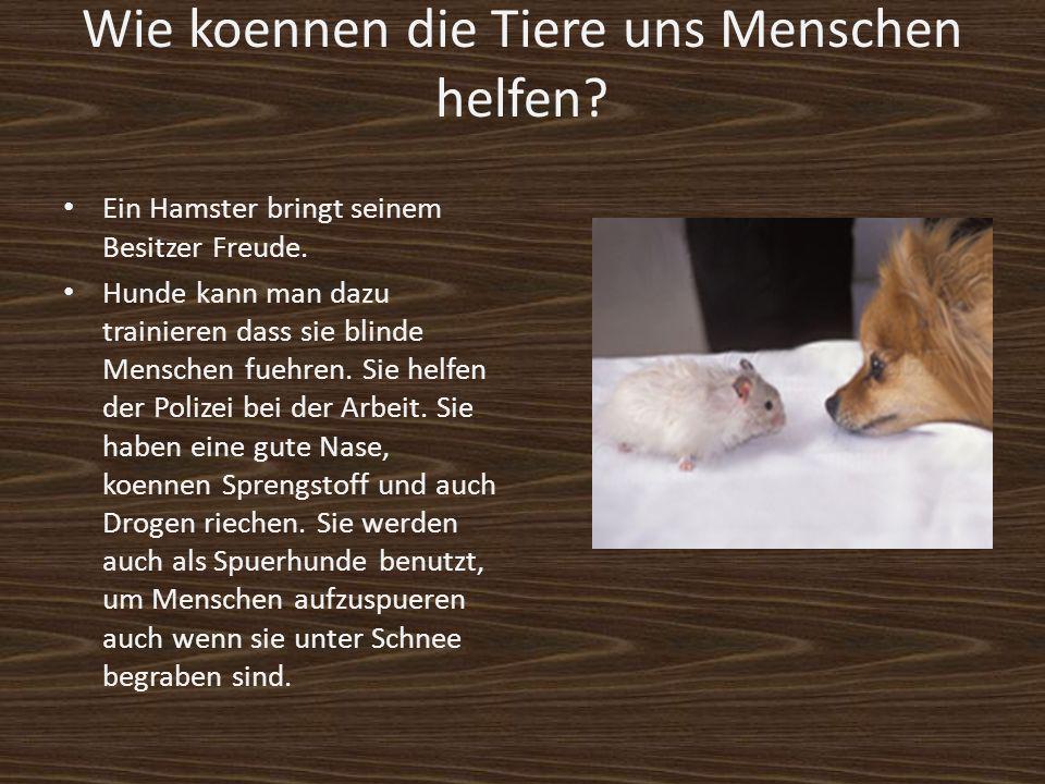 Wie koennen die Tiere uns Menschen helfen? Ein Hamster bringt seinem Besitzer Freude. Hunde kann man dazu trainieren dass sie blinde Menschen fuehren.