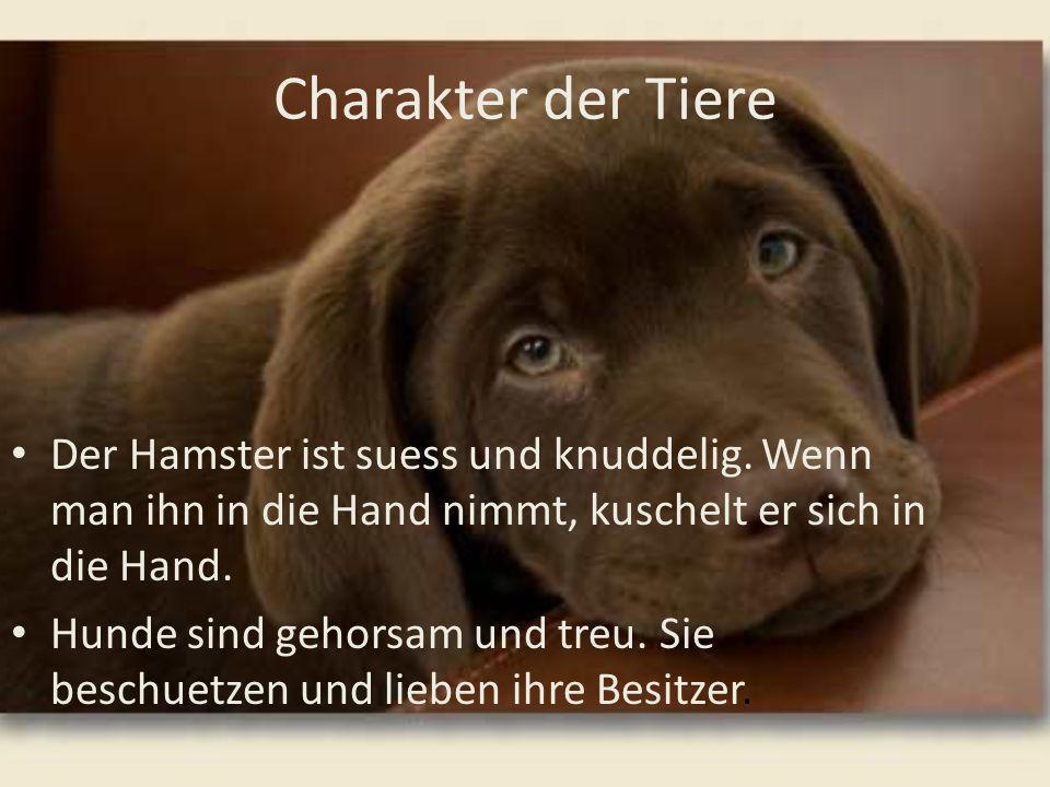 Charakter der Tiere Der Hamster ist suess und knuddelig. Wenn man ihn in die Hand nimmt, kuschelt er sich in die Hand. Hunde sind gehorsam und treu. S