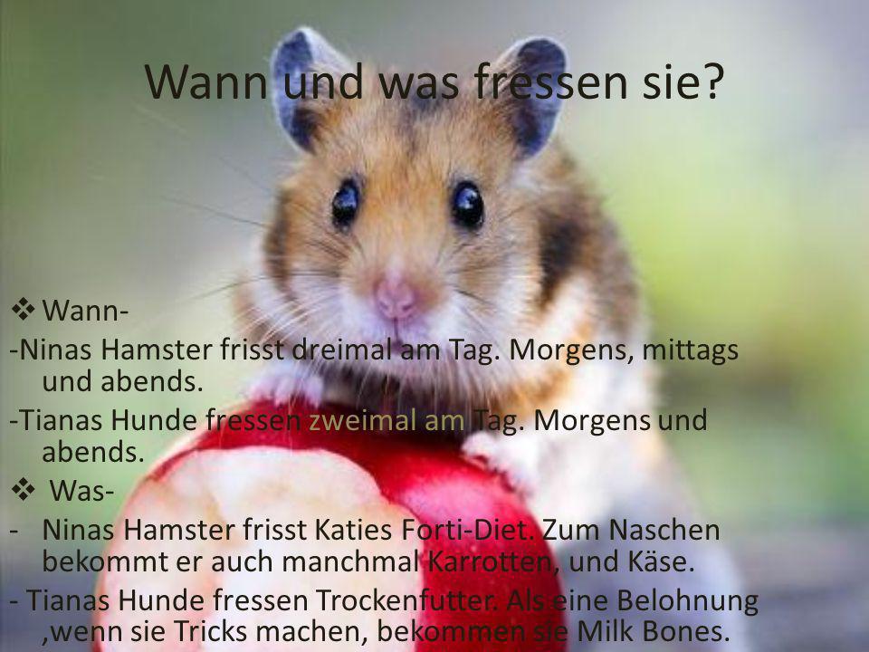 Wann und was fressen sie.Wann- -Ninas Hamster frisst dreimal am Tag.