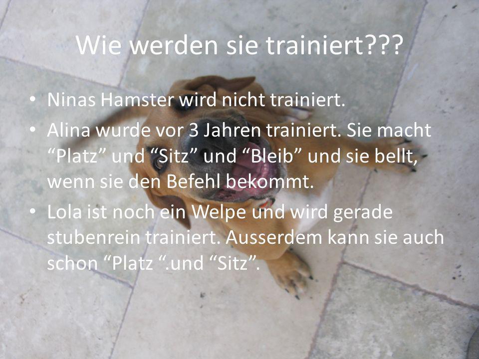Wie werden sie trainiert??? Ninas Hamster wird nicht trainiert. Alina wurde vor 3 Jahren trainiert. Sie macht Platz und Sitz und Bleib und sie bellt,