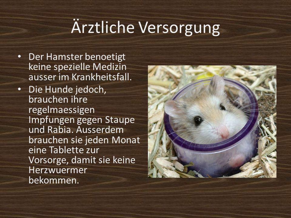 Ärztliche Versorgung Der Hamster benoetigt keine spezielle Medizin ausser im Krankheitsfall. Die Hunde jedoch, brauchen ihre regelmaessigen Impfungen