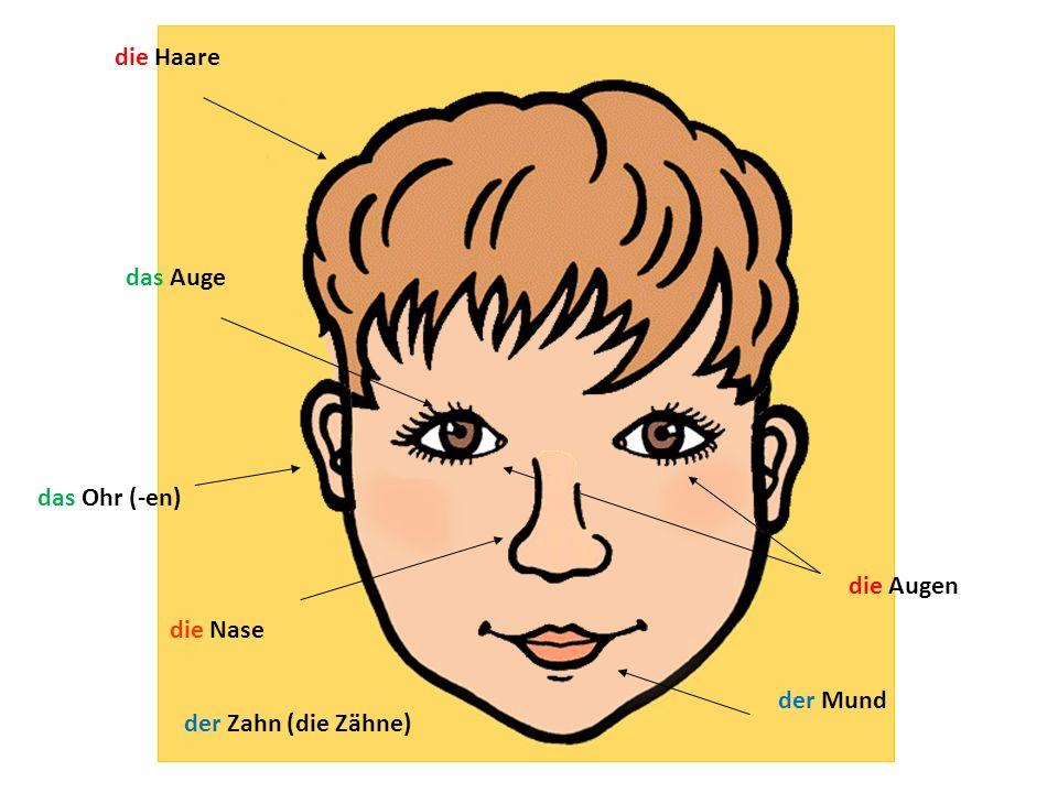 die Haare das Auge die Augen die Nase der Mund das Ohr (-en) der Zahn (die Zähne)