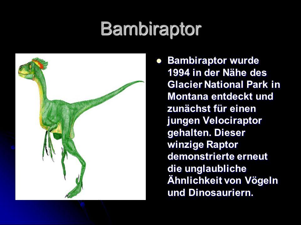 Bambiraptor Bambiraptor wurde 1994 in der Nähe des Glacier National Park in Montana entdeckt und zunächst für einen jungen Velociraptor gehalten. Dies