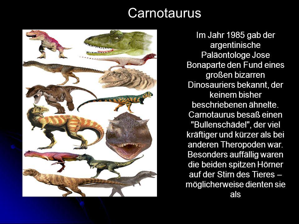 Im Jahr 1985 gab der argentinische Paläontologe Jose Bonaparte den Fund eines großen bizarren Dinosauriers bekannt, der keinem bisher beschriebenen äh