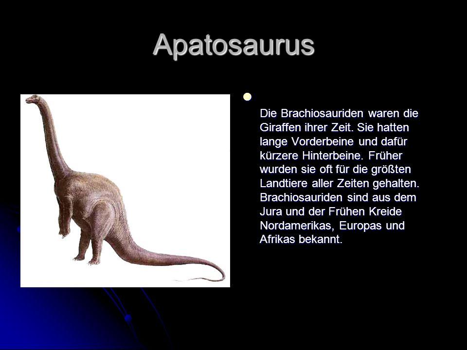 Apatosaurus Die Brachiosauriden waren die Giraffen ihrer Zeit. Sie hatten lange Vorderbeine und dafür kürzere Hinterbeine. Früher wurden sie oft für d