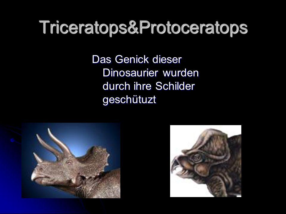 Triceratops&Protoceratops Das Genick dieser Dinosaurier wurden durch ihre Schilder geschütuzt