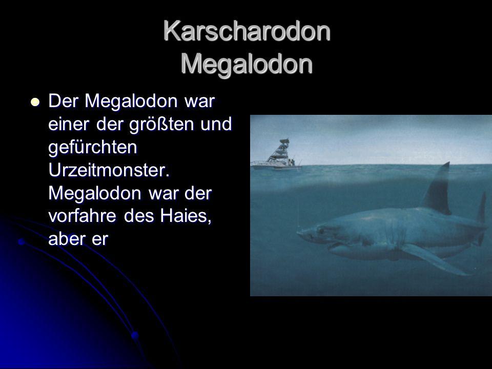 Karscharodon Megalodon Der Megalodon war einer der größten und gefürchten Urzeitmonster. Megalodon war der vorfahre des Haies, aber er Der Megalodon w
