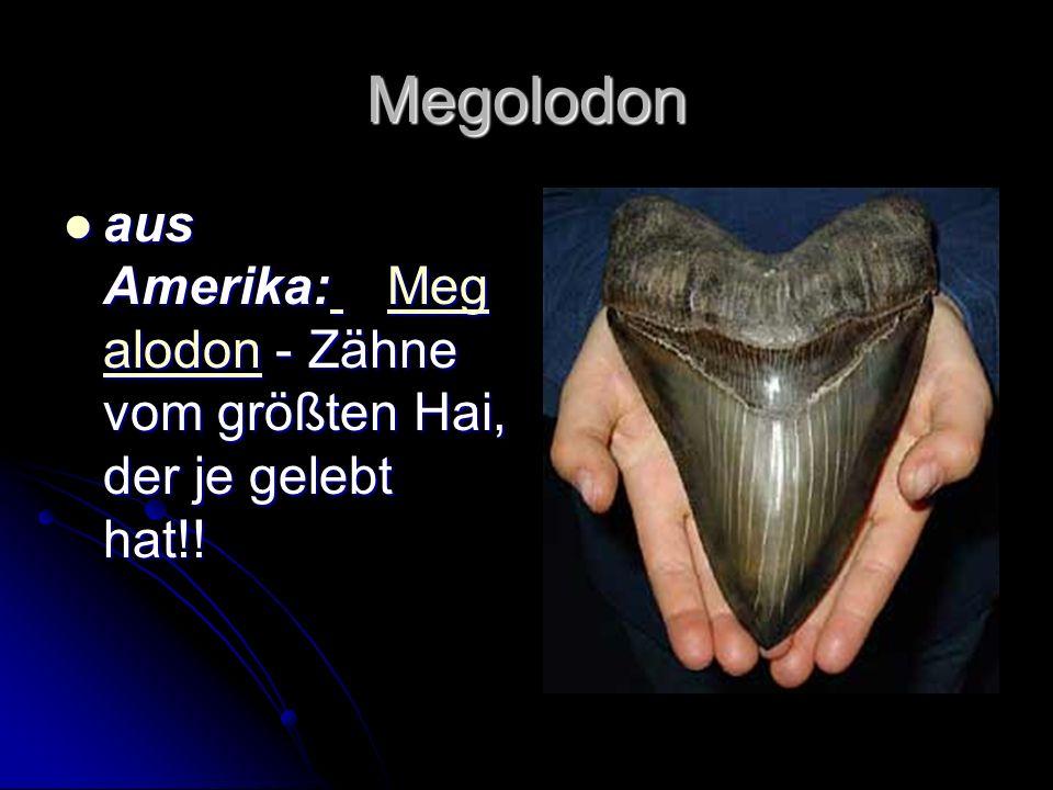 Megolodon aus Amerika: Meg alodon - Zähne vom größten Hai, der je gelebt hat!! aus Amerika: Meg alodon - Zähne vom größten Hai, der je gelebt hat!! Me