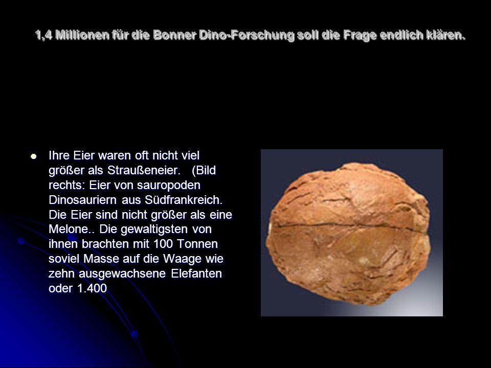 1,4 Millionen für die Bonner Dino-Forschung soll die Frage endlich klären. Ihre Eier waren oft nicht viel größer als Straußeneier. (Bild rechts: Eier