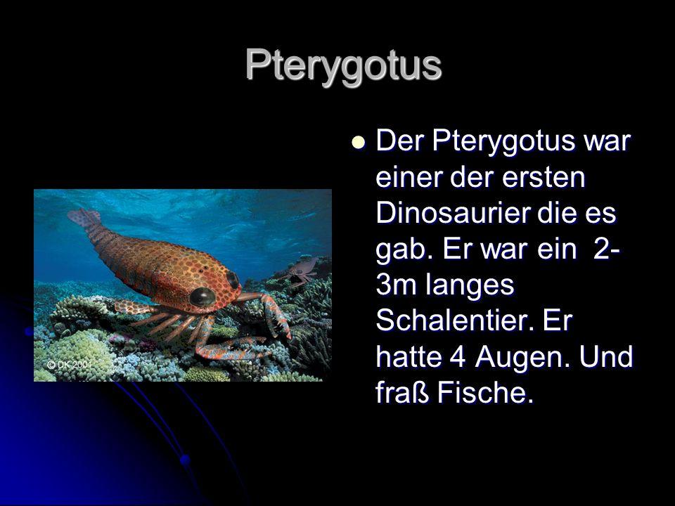 Pterygotus Pterygotus Der Pterygotus war einer der ersten Dinosaurier die es gab. Er war ein 2- 3m langes Schalentier. Er hatte 4 Augen. Und fraß Fisc