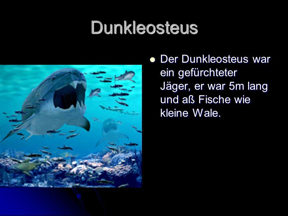 Dunkleosteus Der Dunkleosteus war ein gefürchteter Jäger, er war 5m lang und aß Fische wie kleine Wale. Der Dunkleosteus war ein gefürchteter Jäger, e