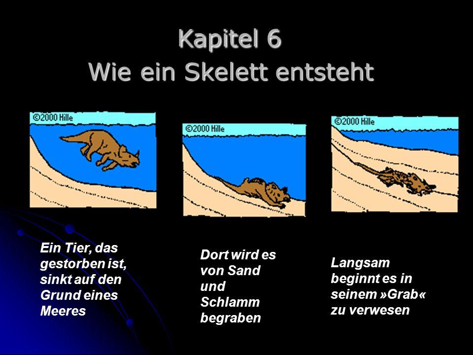 Ein Tier, das gestorben ist, sinkt auf den Grund eines Meeres Dort wird es von Sand und Schlamm begraben Langsam beginnt es in seinem »Grab« zu verwes