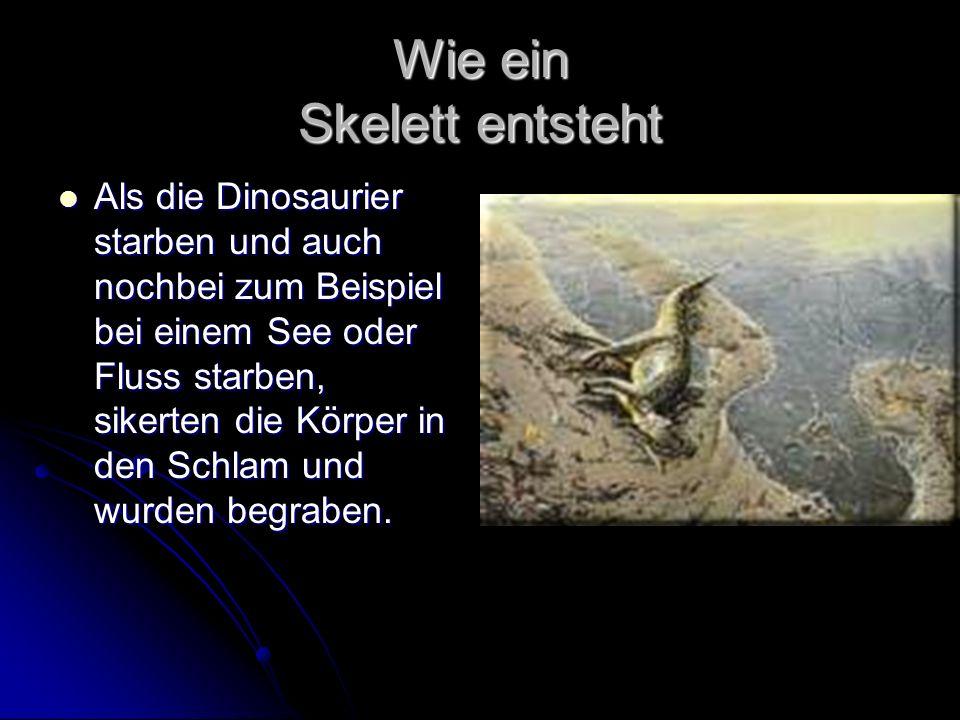 Wie ein Skelett entsteht Als die Dinosaurier starben und auch nochbei zum Beispiel bei einem See oder Fluss starben, sikerten die Körper in den Schlam