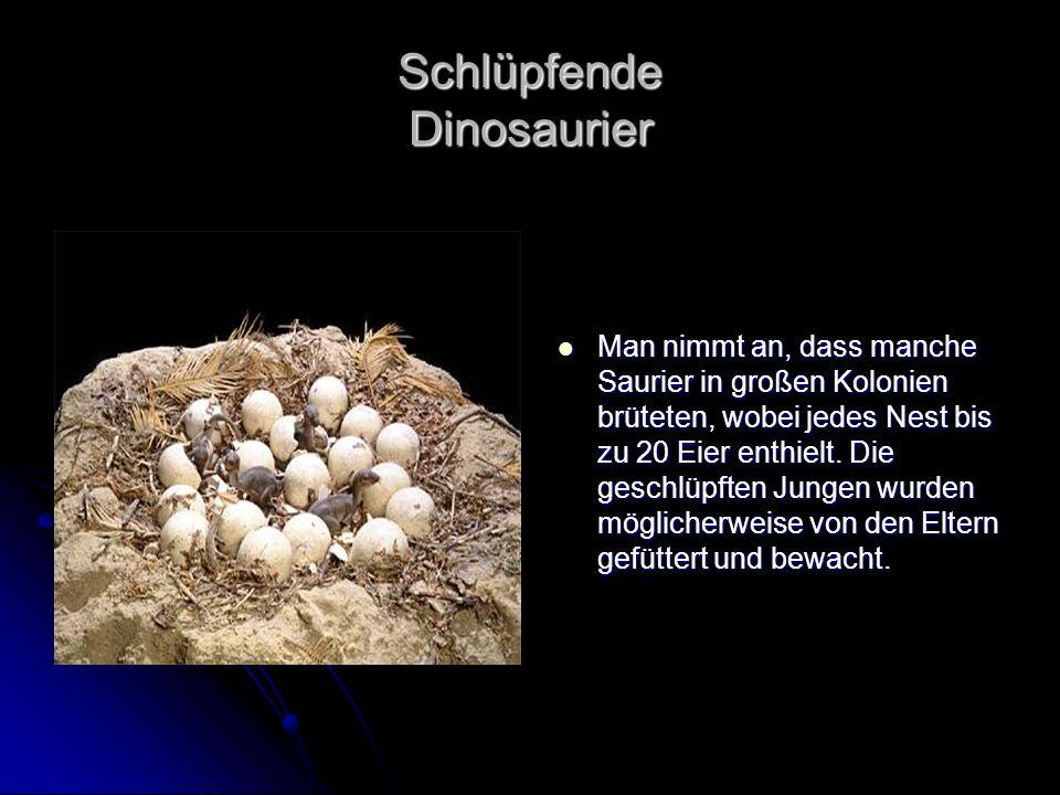Schlüpfende Dinosaurier Man nimmt an, dass manche Saurier in großen Kolonien brüteten, wobei jedes Nest bis zu 20 Eier enthielt. Die geschlüpften Jung