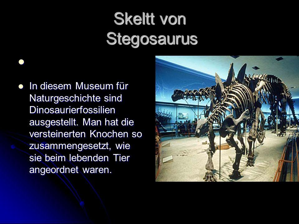 Skeltt von Stegosaurus In diesem Museum für Naturgeschichte sind Dinosaurierfossilien ausgestellt. Man hat die versteinerten Knochen so zusammengesetz