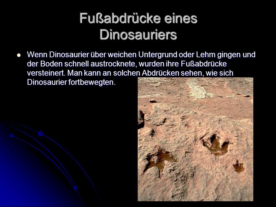 Fußabdrücke eines Dinosauriers Wenn Dinosaurier über weichen Untergrund oder Lehm gingen und der Boden schnell austrocknete, wurden ihre Fußabdrücke v