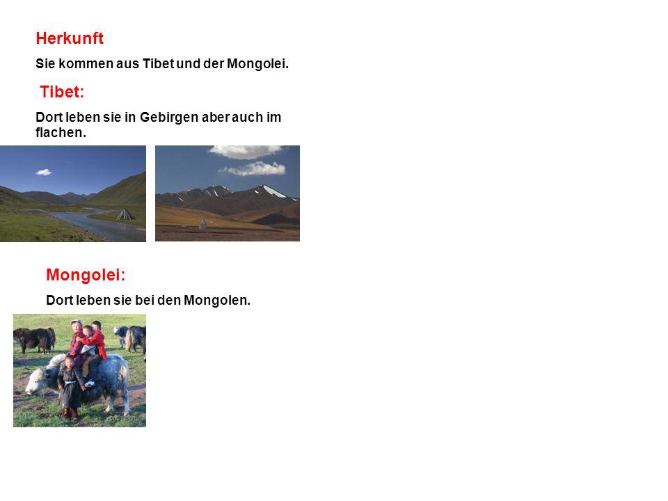 Herkunft Sie kommen aus Tibet und der Mongolei. Tibet: Dort leben sie in Gebirgen aber auch im flachen. Mongolei: Dort leben sie bei den Mongolen.