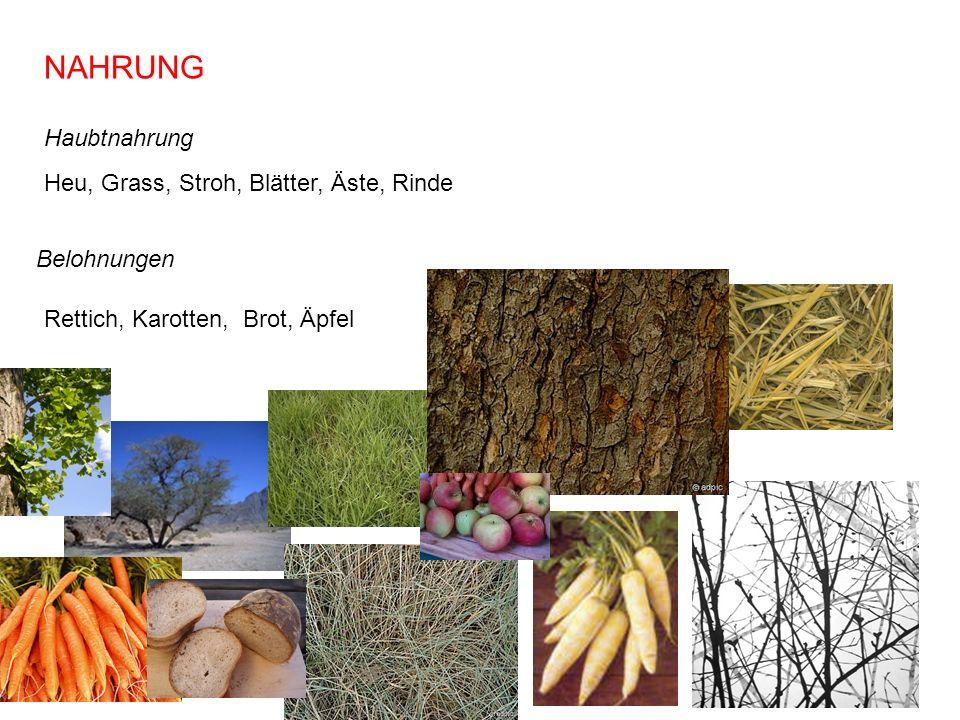 NAHRUNG Heu, Grass, Stroh, Blätter, Äste, Rinde Haubtnahrung Belohnungen Rettich, Karotten, Brot, Äpfel