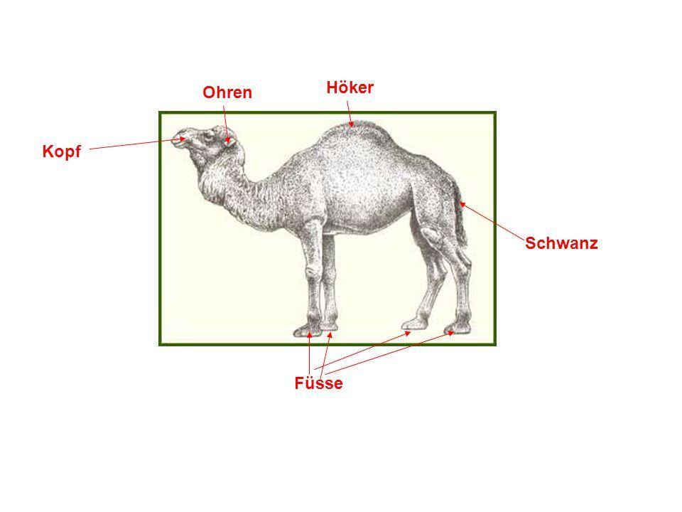 Lebensräume Lebensraum des Dromedar.Kamele hingegen leben in kalten Regionen.