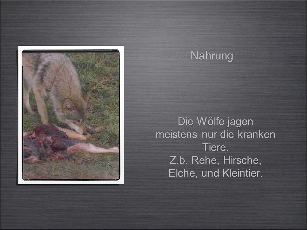 es gibt viele Geschichten über den Wolf.Z.b.Peter und der Wolf, Rotkäpchen e.t.c.