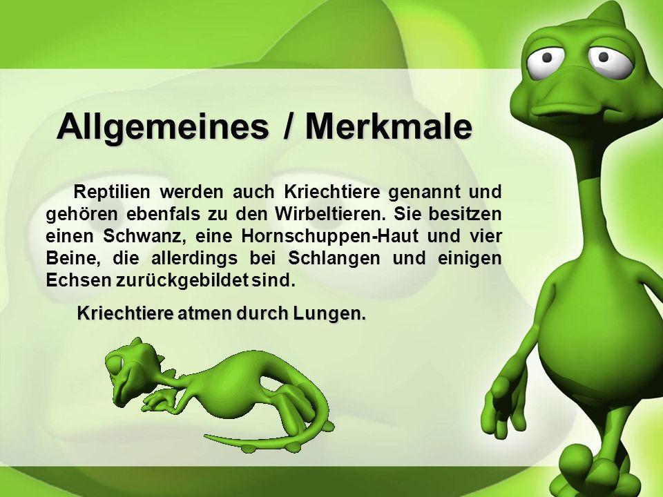 Allgemeines / Merkmale Reptilien werden auch Kriechtiere genannt und gehören ebenfals zu den Wirbeltieren.