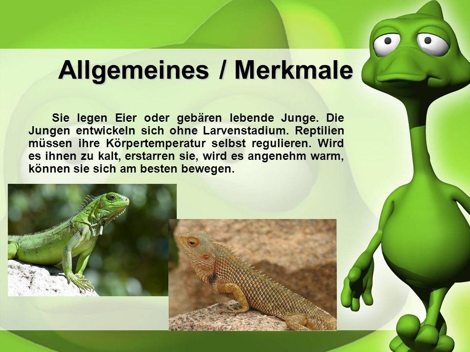 Allgemeines / Merkmale Reptilien werden auch Kriechtiere genannt und gehören ebenfals zu den Wirbeltieren. Sie besitzen einen Schwanz, eine Hornschupp