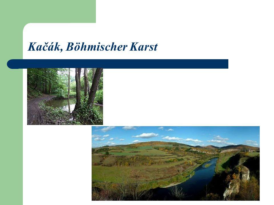 Kačák, Böhmischer Karst
