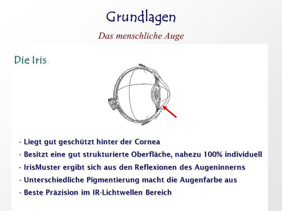 Grundlagen Das menschliche Auge Die Iris. Die Iris. - Liegt gut geschützt hinter der Cornea - Besitzt eine gut strukturierte Oberfläche, nahezu 100% i