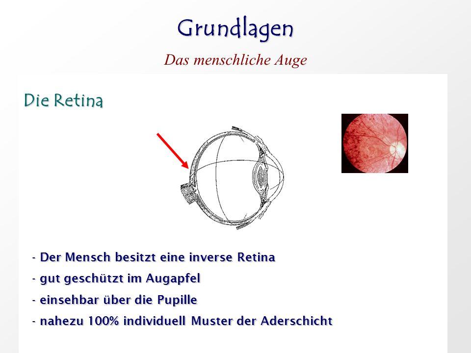 Grundlagen Das menschliche Auge Die Retina Die Retina - Der Mensch besitzt eine inverse Retina - gut geschützt im Augapfel - einsehbar über die Pupill