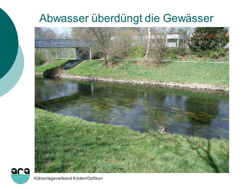 Kläranlageverband Kloten/Opfikon Abwasser überdüngt die Gewässer