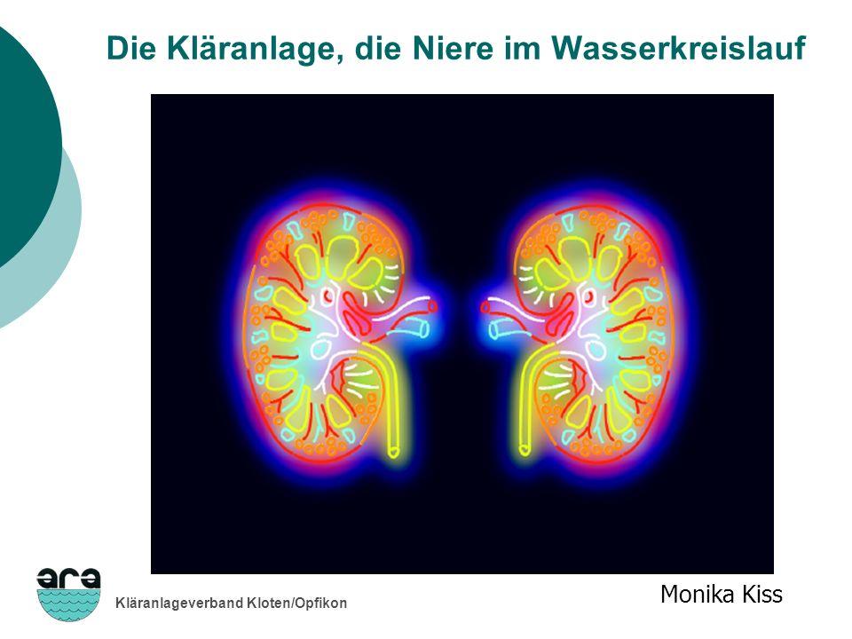 Kläranlageverband Kloten/Opfikon Monika Kiss Die Kläranlage, die Niere im Wasserkreislauf