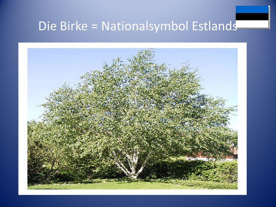 Die Birke = Nationalsymbol Estlands