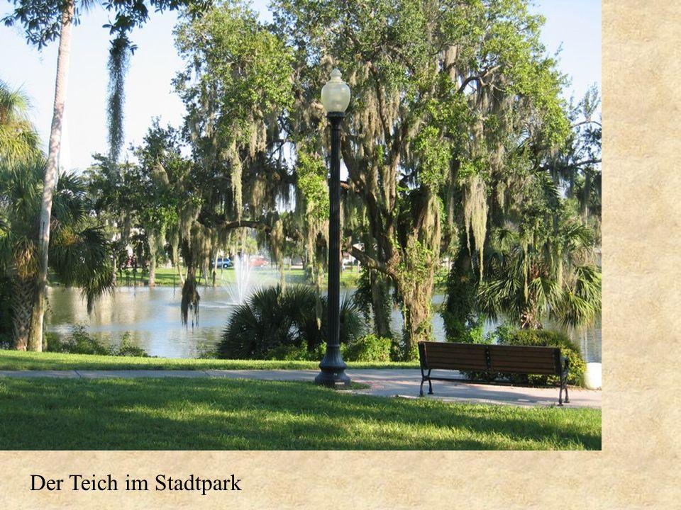 Der Teich im Stadtpark