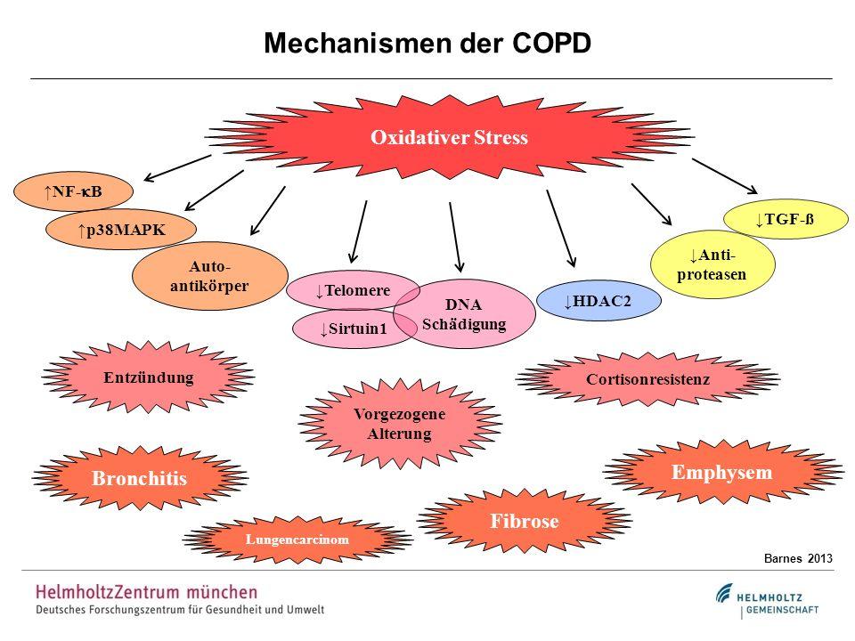 Mechanismen der COPD Barnes 2013 Oxidativer Stress Entzündung Vorgezogene Alterung Cortisonresistenz Lungencarcinom Emphysem Bronchitis Fibrose NF- B