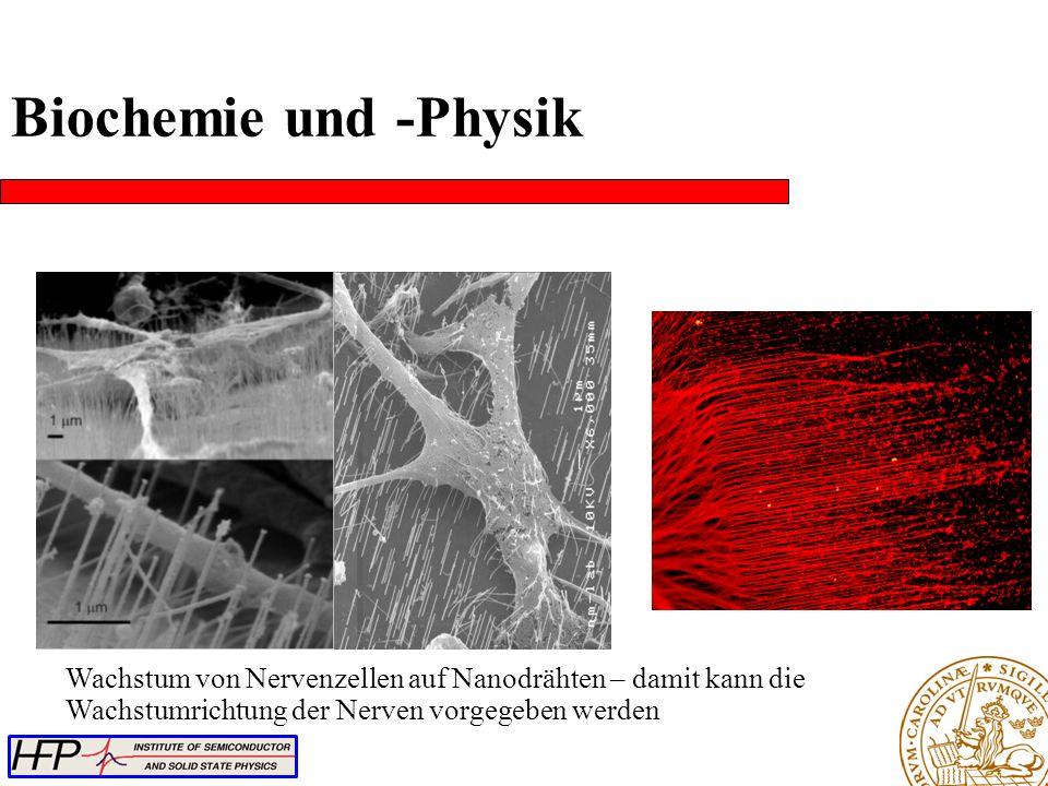 Wachstum von Nervenzellen auf Nanodrähten – damit kann die Wachstumrichtung der Nerven vorgegeben werden Biochemie und -Physik